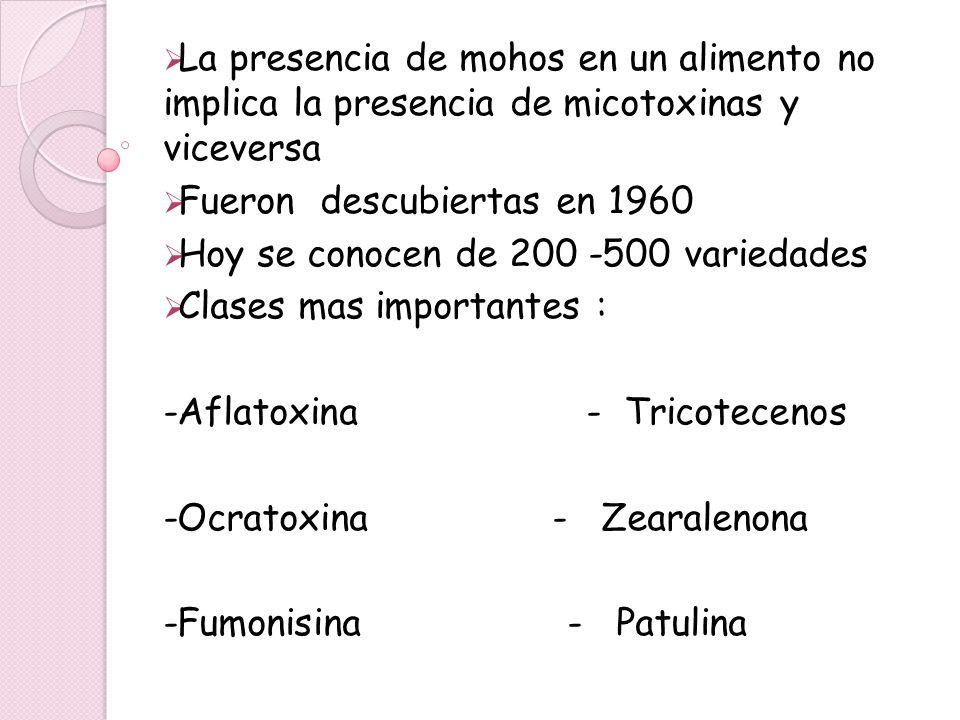 La presencia de mohos en un alimento no implica la presencia de micotoxinas y viceversa