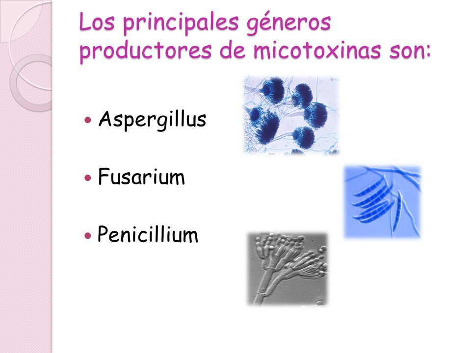 Los principales géneros productores de micotoxinas son: