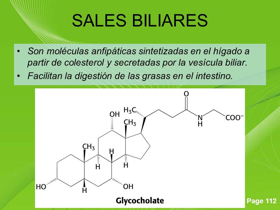 SALES BILIARES Son moléculas anfipáticas sintetizadas en el hígado a partir de colesterol y secretadas por la vesícula biliar.