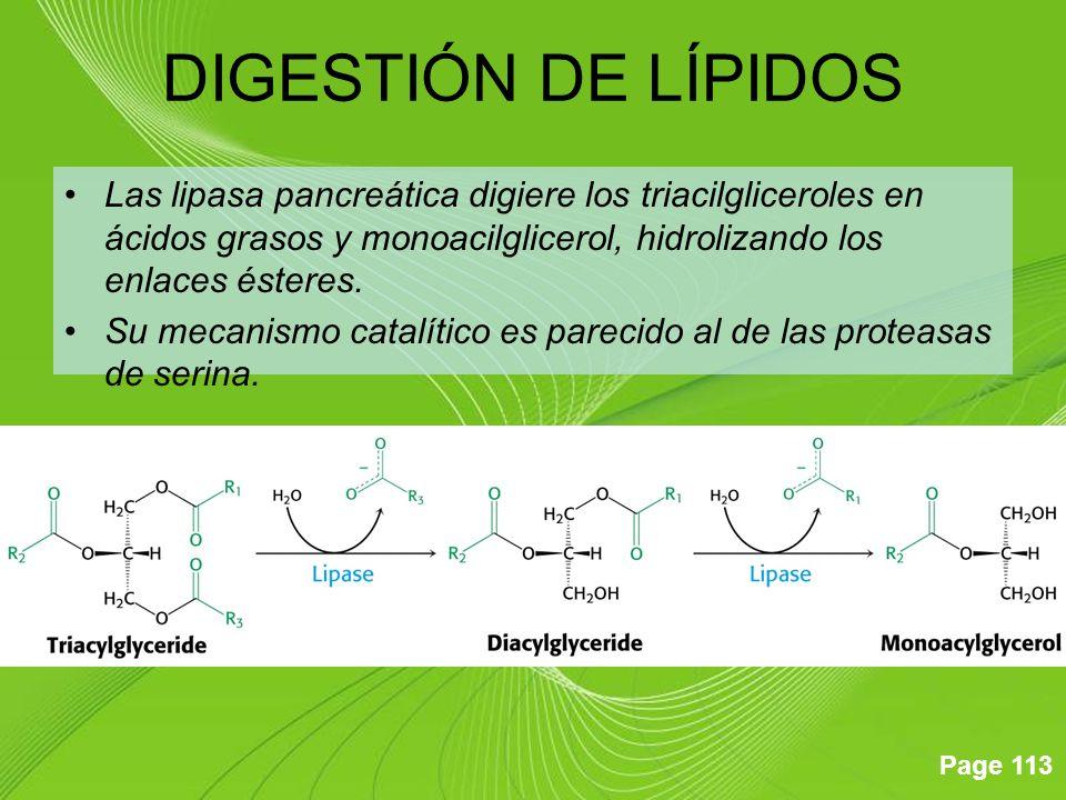 DIGESTIÓN DE LÍPIDOS Las lipasa pancreática digiere los triacilgliceroles en ácidos grasos y monoacilglicerol, hidrolizando los enlaces ésteres.