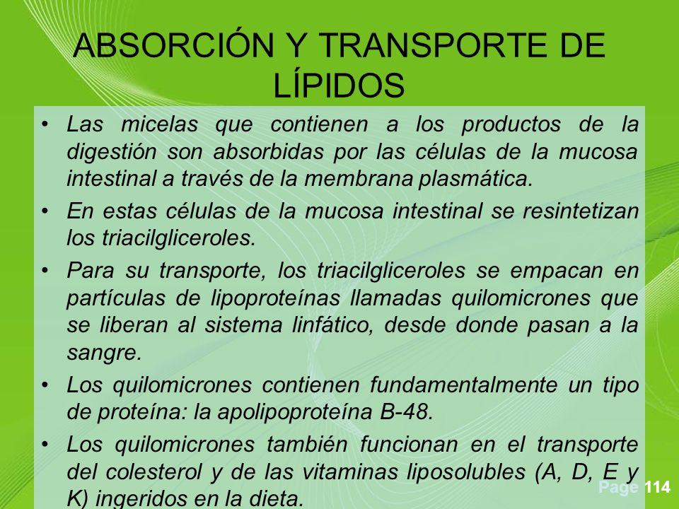 ABSORCIÓN Y TRANSPORTE DE LÍPIDOS
