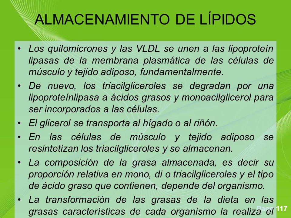 ALMACENAMIENTO DE LÍPIDOS