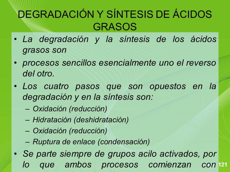 DEGRADACIÓN Y SÍNTESIS DE ÁCIDOS GRASOS