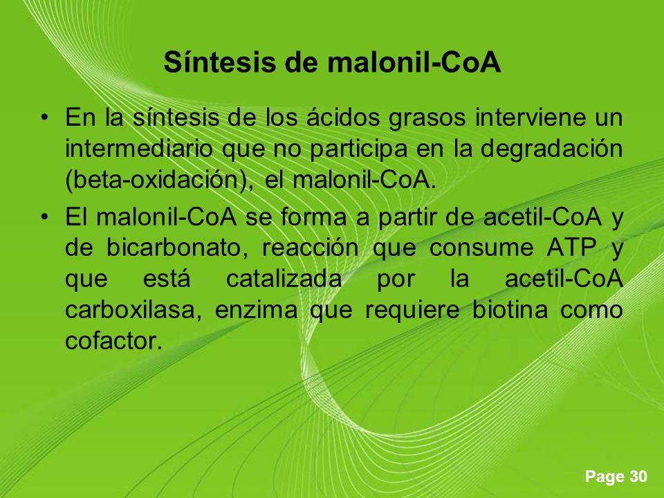 Síntesis de malonil-CoA