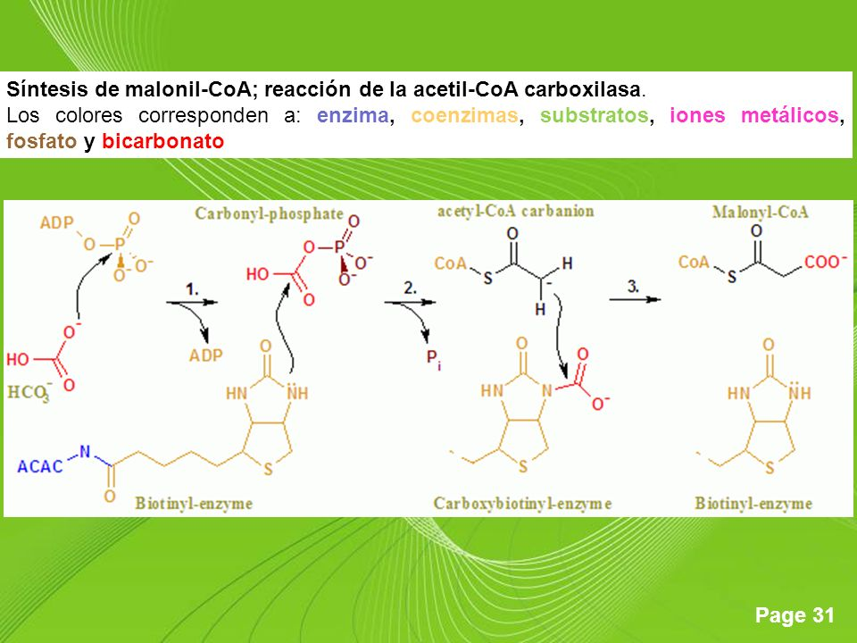 Síntesis de malonil-CoA; reacción de la acetil-CoA carboxilasa.