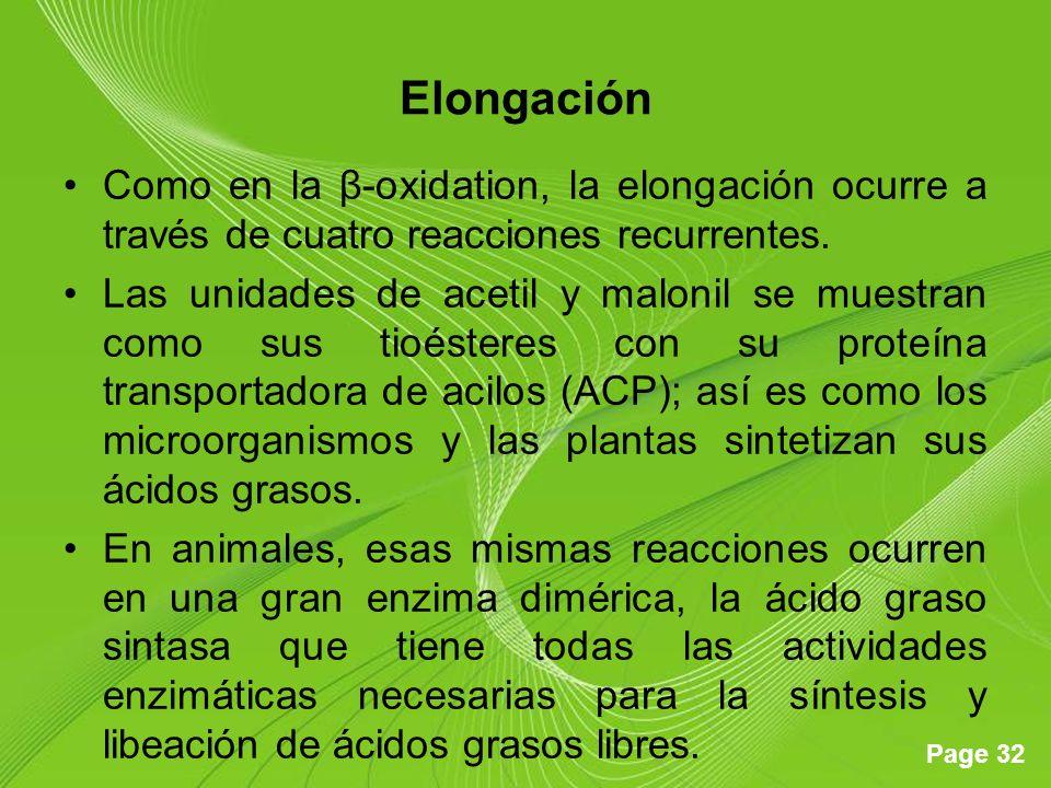 Elongación Como en la β-oxidation, la elongación ocurre a través de cuatro reacciones recurrentes.