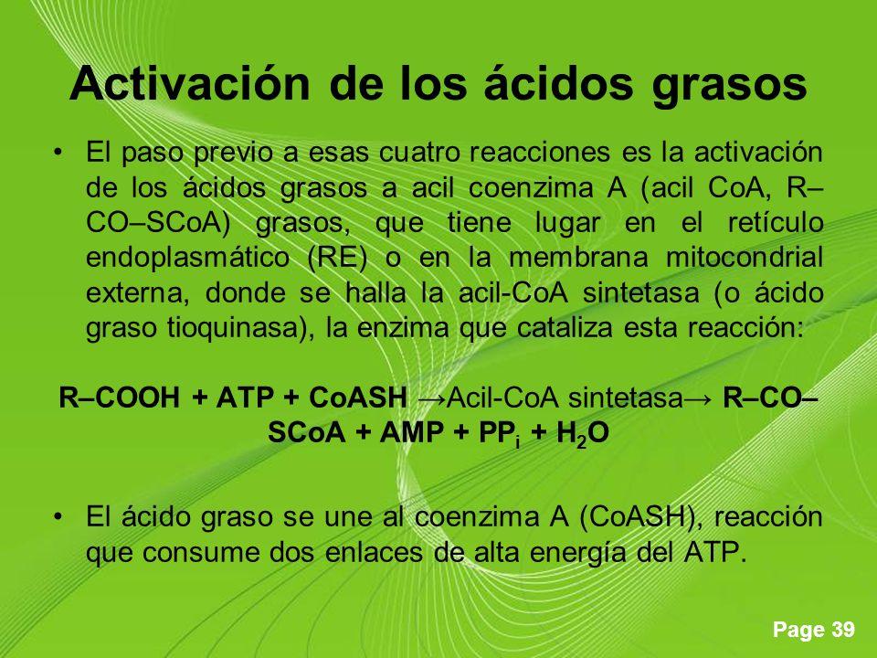 Activación de los ácidos grasos