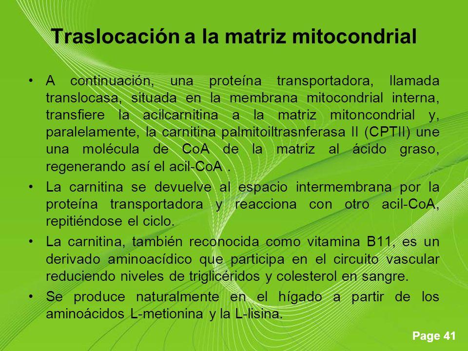 Traslocación a la matriz mitocondrial