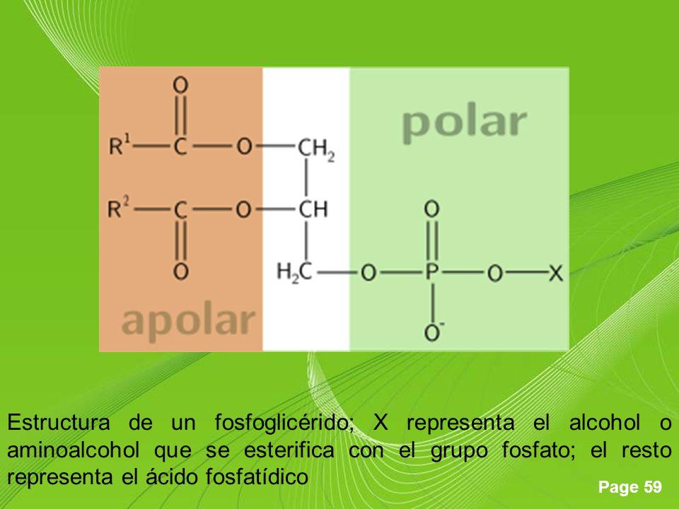 Estructura de un fosfoglicérido; X representa el alcohol o aminoalcohol que se esterifica con el grupo fosfato; el resto representa el ácido fosfatídico