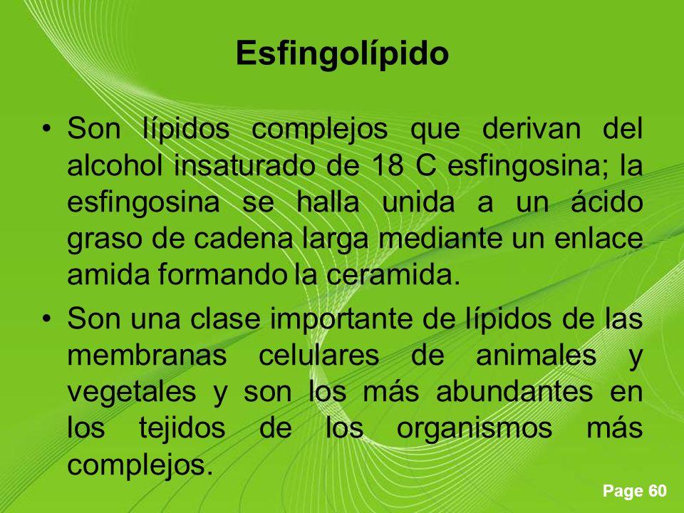 Esfingolípido