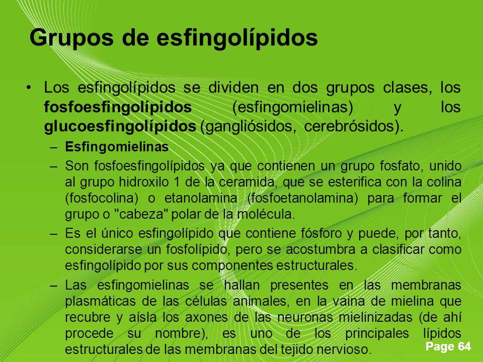 Grupos de esfingolípidos