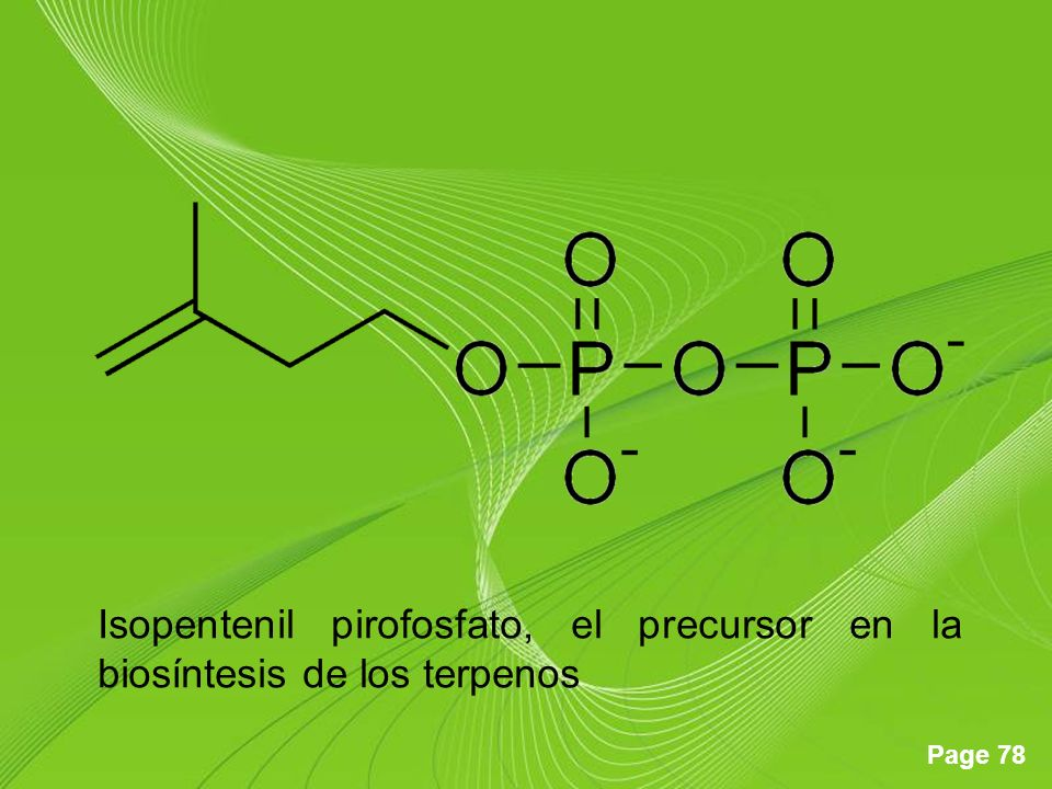 Isopentenil pirofosfato, el precursor en la biosíntesis de los terpenos
