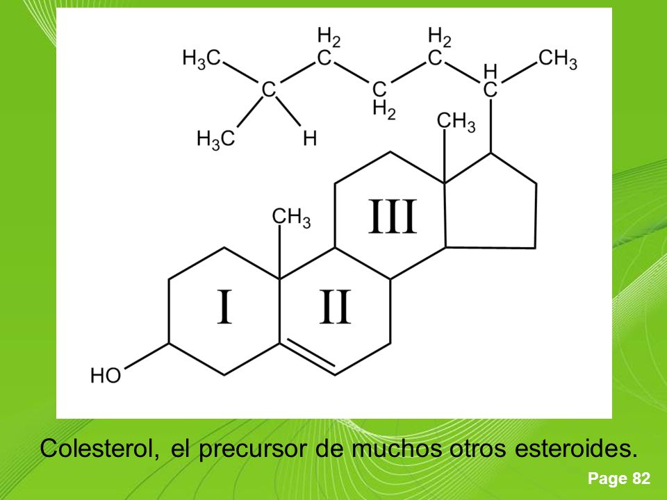 Colesterol, el precursor de muchos otros esteroides.