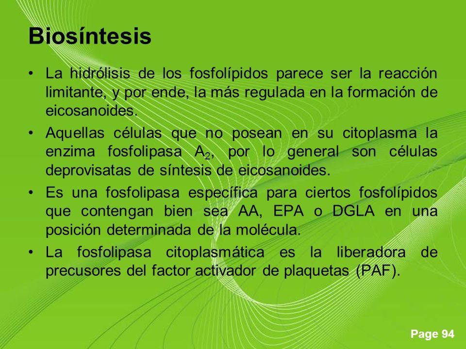 Biosíntesis La hidrólisis de los fosfolípidos parece ser la reacción limitante, y por ende, la más regulada en la formación de eicosanoides.