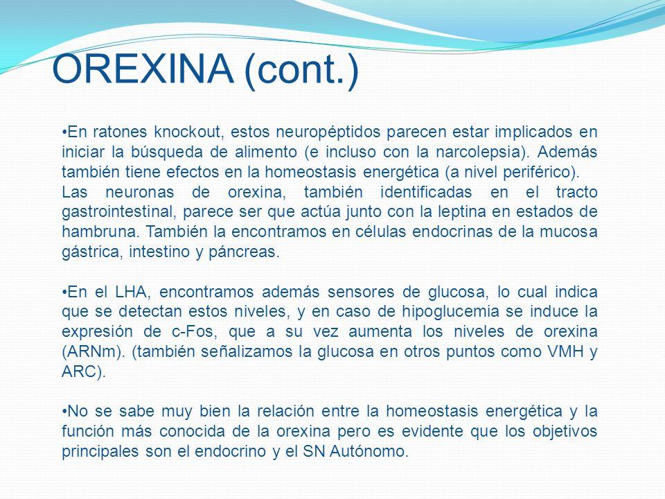 OREXINA (cont.)