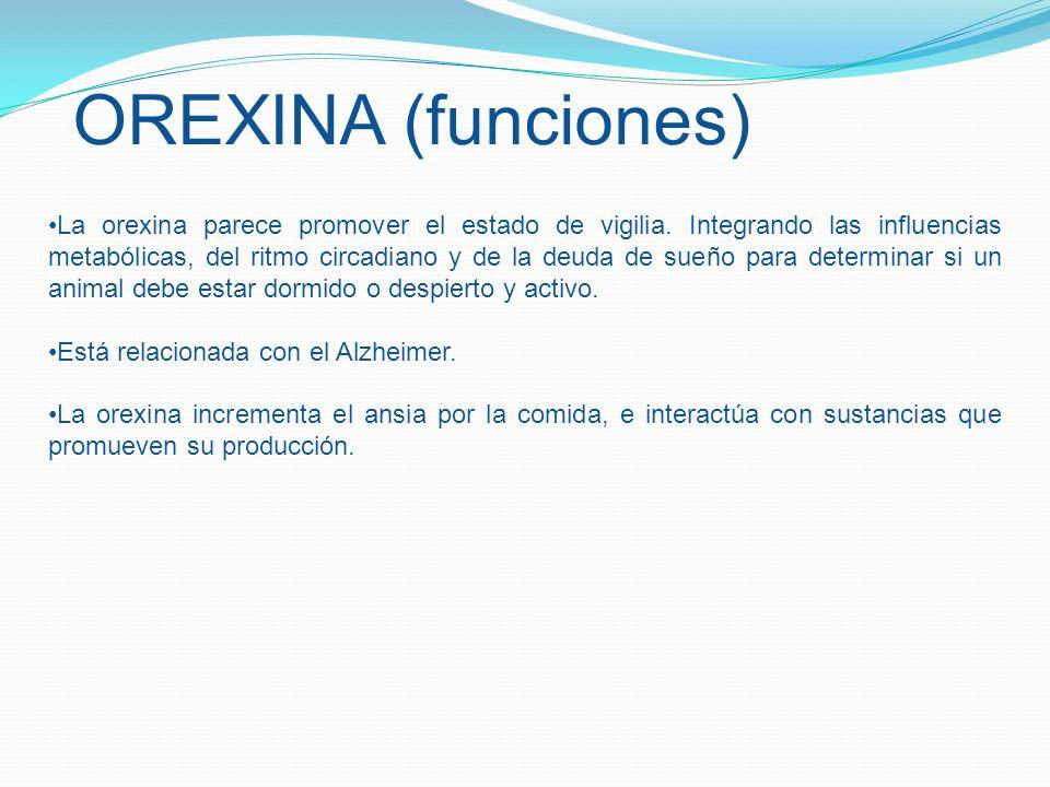 OREXINA (funciones)