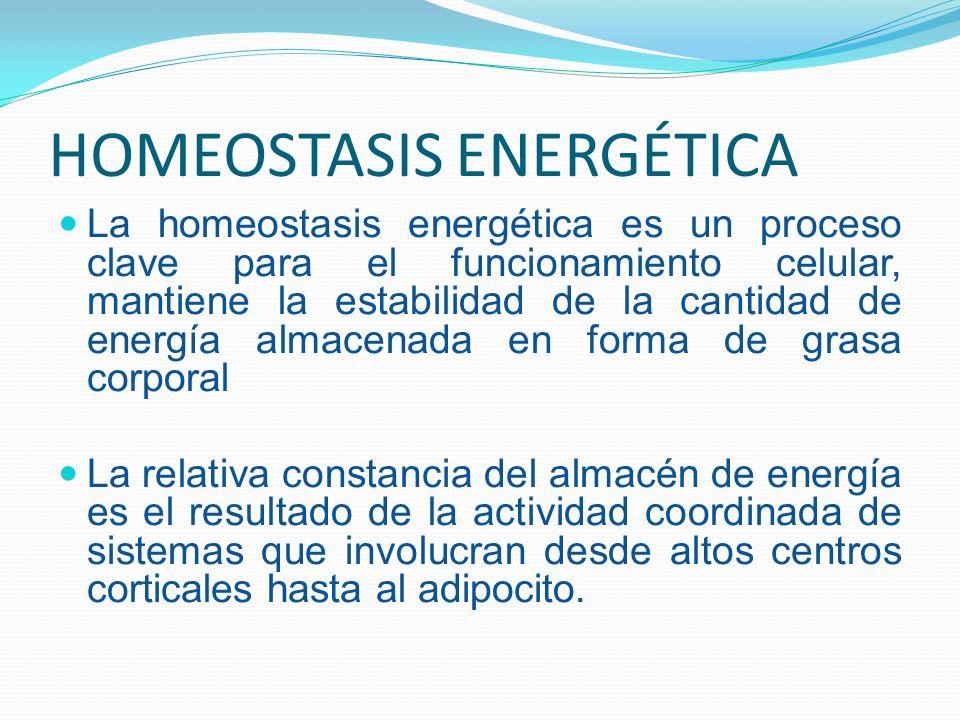 HOMEOSTASIS ENERGÉTICA