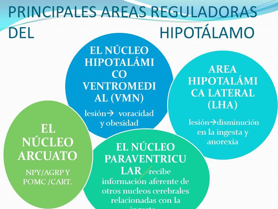 PRINCIPALES AREAS REGULADORAS DEL HIPOTÁLAMO