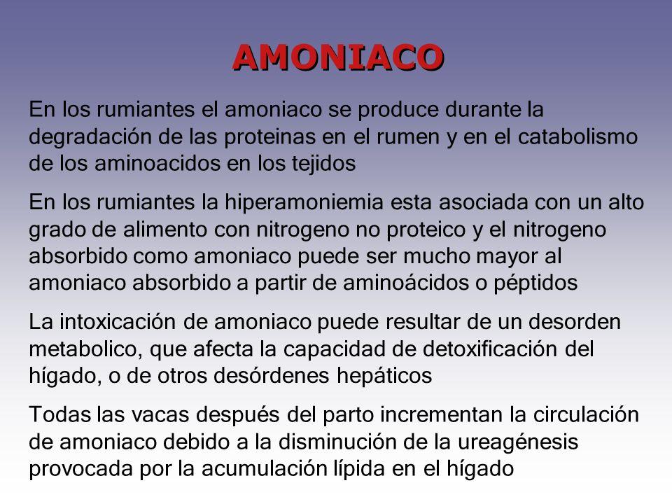 AMONIACO