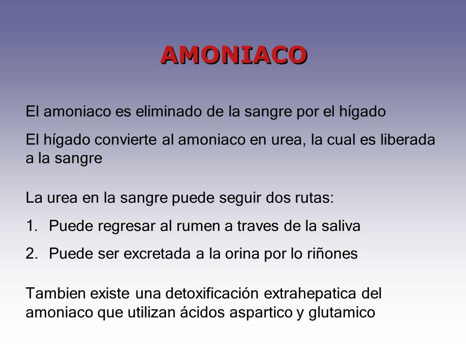 AMONIACO El amoniaco es eliminado de la sangre por el hígado