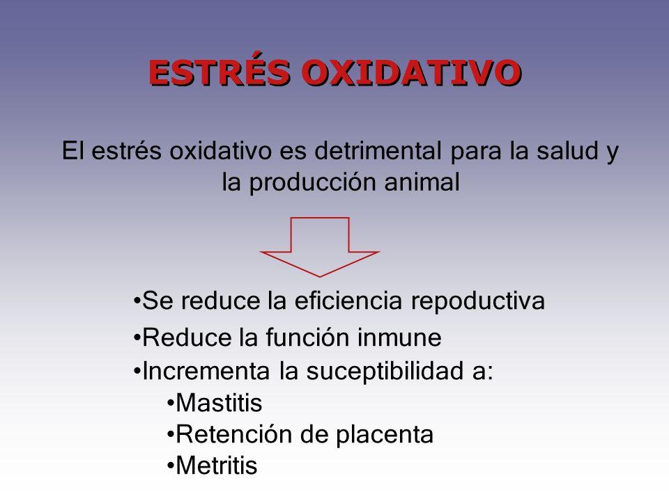 ESTRÉS OXIDATIVO El estrés oxidativo es detrimental para la salud y la producción animal. Se reduce la eficiencia repoductiva.