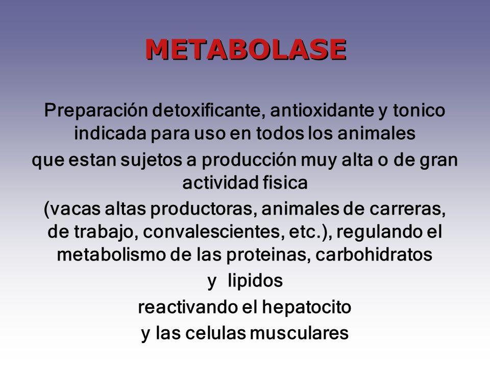 METABOLASE Preparación detoxificante, antioxidante y tonico indicada para uso en todos los animales.
