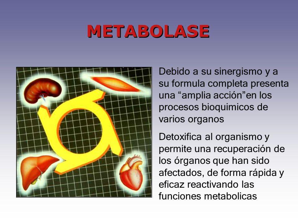METABOLASE Debido a su sinergismo y a su formula completa presenta una amplia acción en los procesos bioquimicos de varios organos.