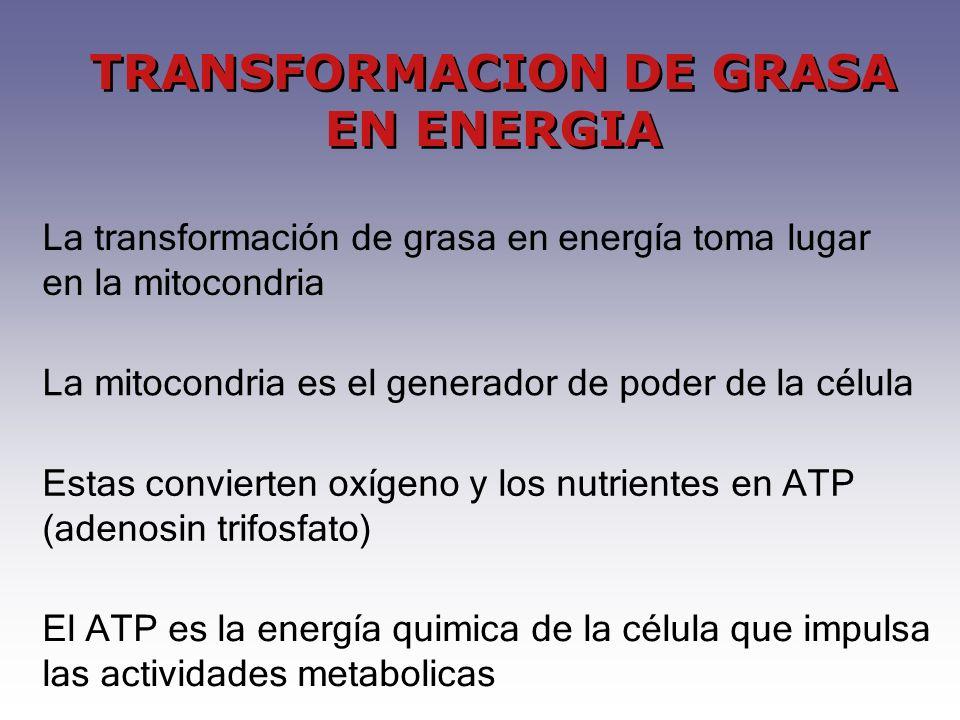TRANSFORMACION DE GRASA EN ENERGIA