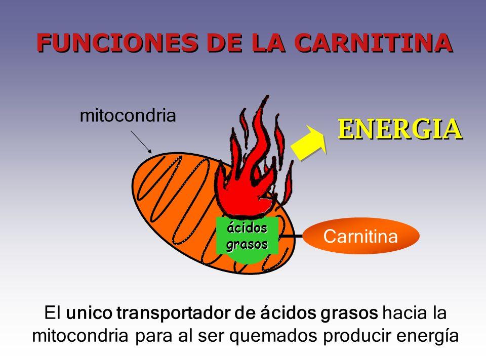 FUNCIONES DE LA CARNITINA