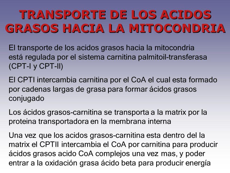 TRANSPORTE DE LOS ACIDOS GRASOS HACIA LA MITOCONDRIA