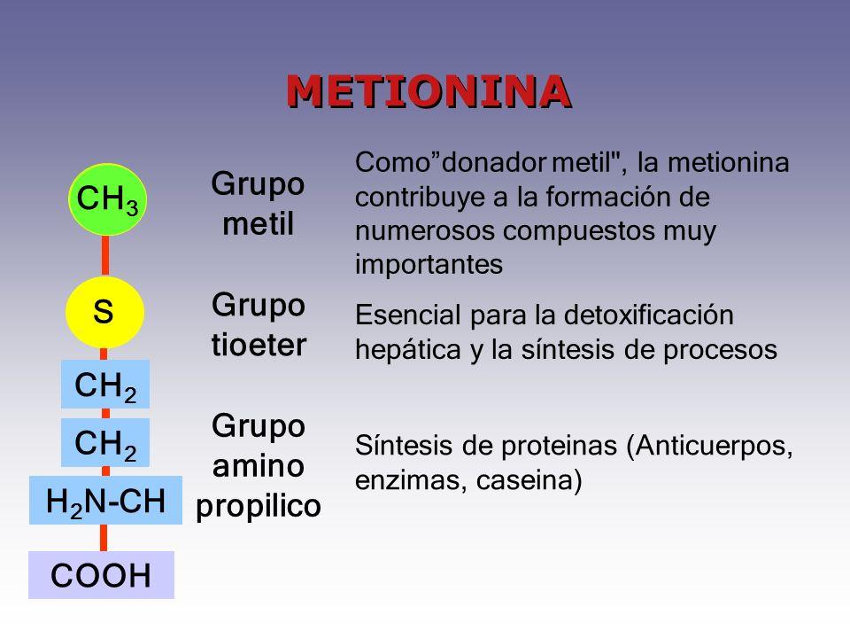 METIONINA CH3 Grupo metil CH3 S S Grupo tioeter CH2 H2N-CH CH2 H2N-CH
