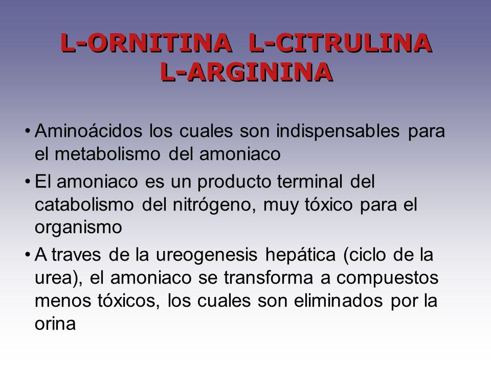 L-ORNITINA L-CITRULINA L-ARGININA