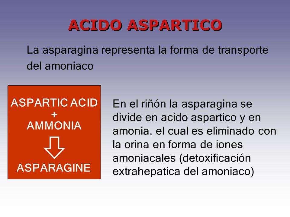 ACIDO ASPARTICO La asparagina representa la forma de transporte