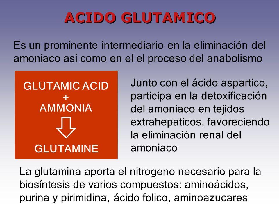 ACIDO GLUTAMICO Es un prominente intermediario en la eliminación del amoniaco asi como en el el proceso del anabolismo.
