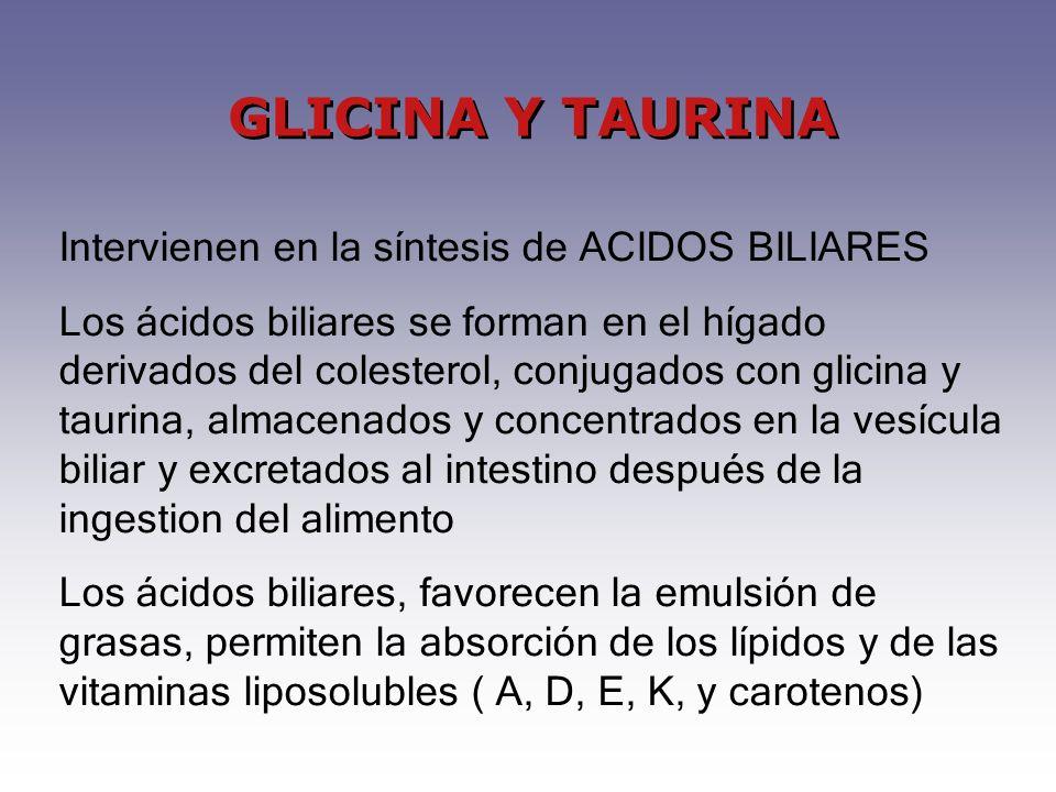 GLICINA Y TAURINA Intervienen en la síntesis de ACIDOS BILIARES