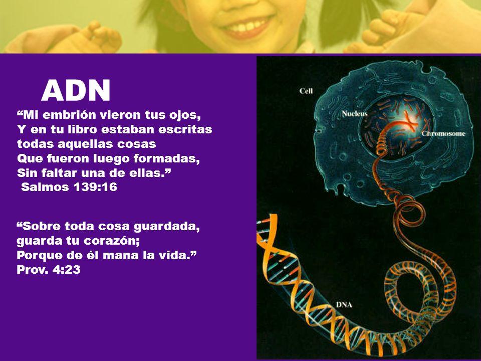 ADN Mi embrión vieron tus ojos, Y en tu libro estaban escritas todas aquellas cosas Que fueron luego formadas, Sin faltar una de ellas.