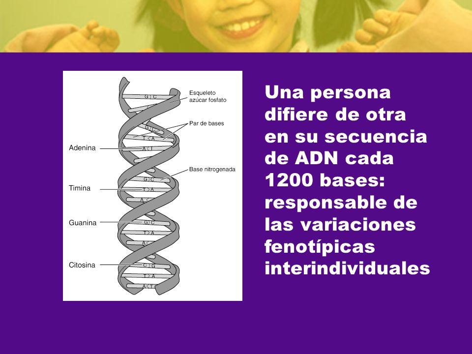 Una persona difiere de otra. en su secuencia. de ADN cada. 1200 bases: responsable de. las variaciones.