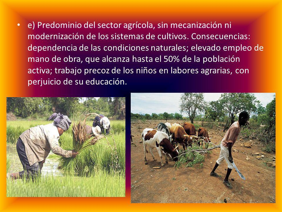 e) Predominio del sector agrícola, sin mecanización ni modernización de los sistemas de cultivos.