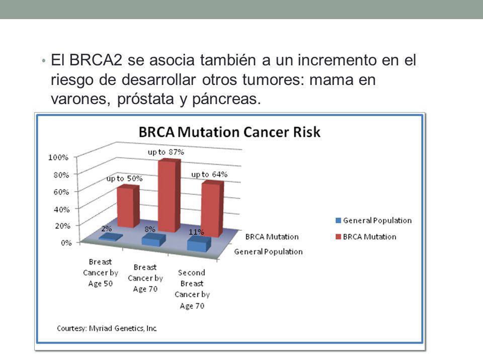 El BRCA2 se asocia también a un incremento en el riesgo de desarrollar otros tumores: mama en varones, próstata y páncreas.