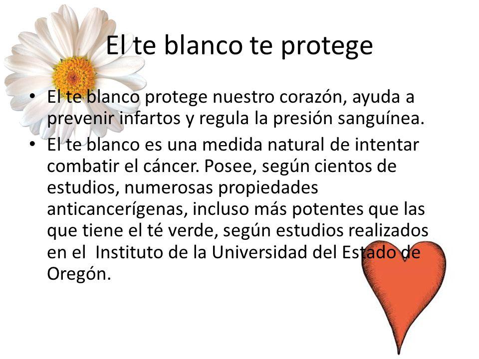 El te blanco te protege El te blanco protege nuestro corazón, ayuda a prevenir infartos y regula la presión sanguínea.