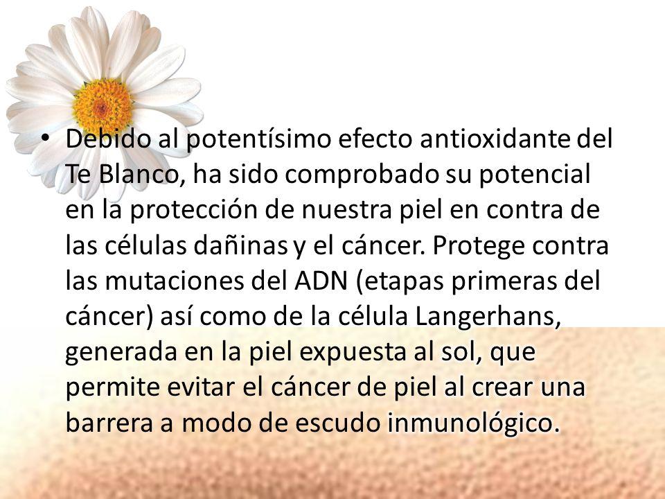 Debido al potentísimo efecto antioxidante del Te Blanco, ha sido comprobado su potencial en la protección de nuestra piel en contra de las células dañinas y el cáncer.