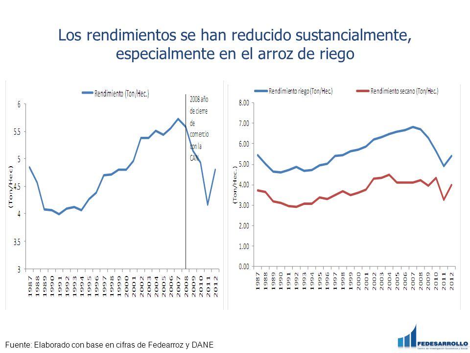 Los rendimientos se han reducido sustancialmente, especialmente en el arroz de riego