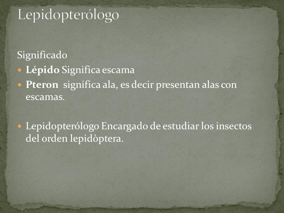 Lepidopterólogo Significado Lépido Significa escama