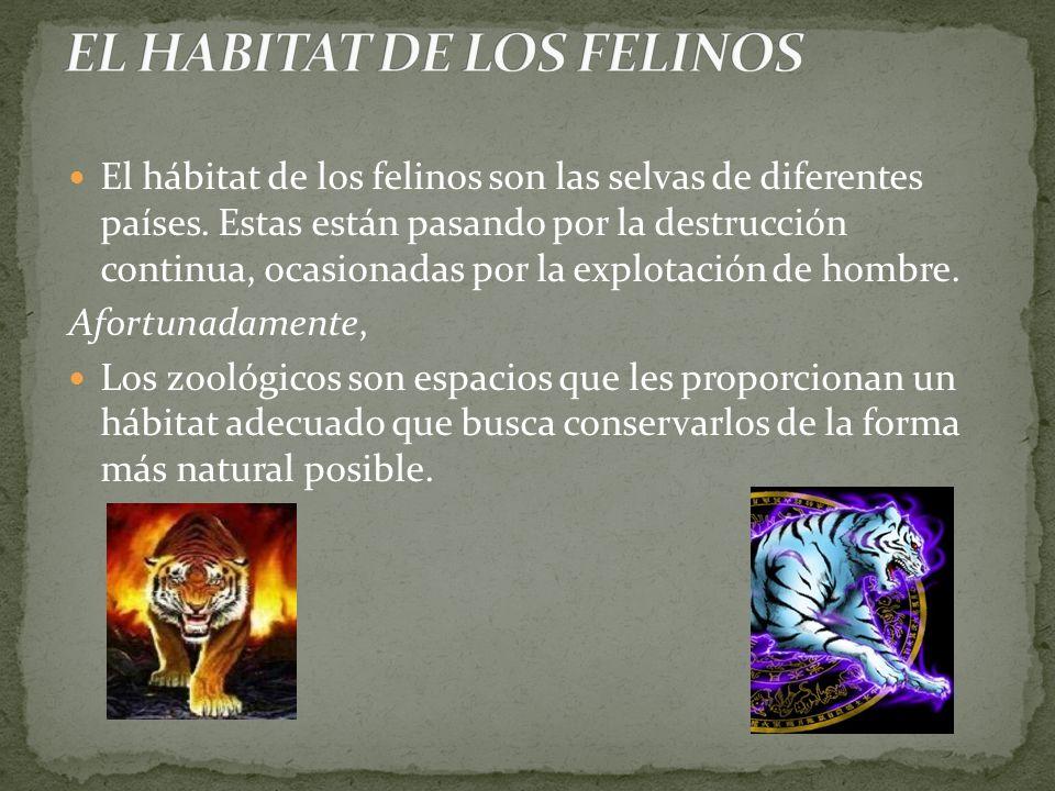 EL HABITAT DE LOS FELINOS