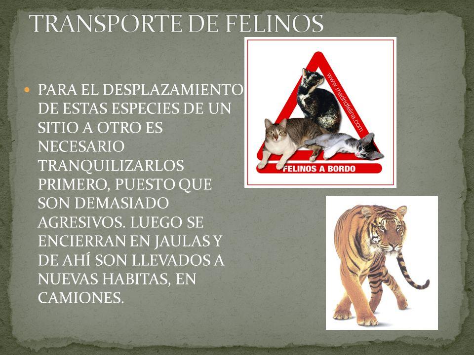 TRANSPORTE DE FELINOS