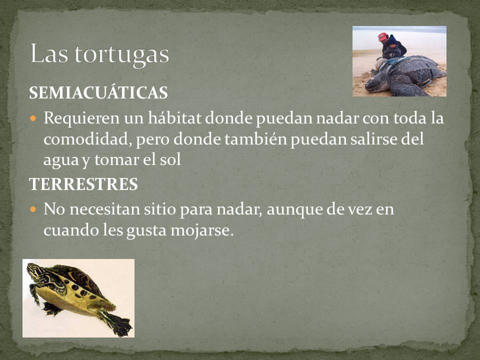 Las tortugas SEMIACUÁTICAS