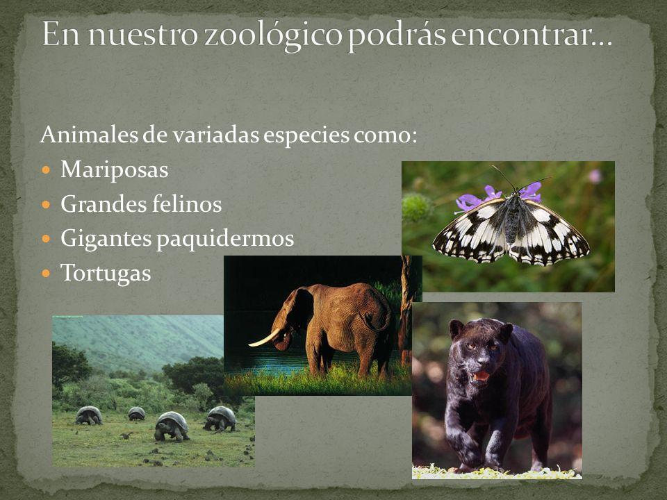 En nuestro zoológico podrás encontrar...