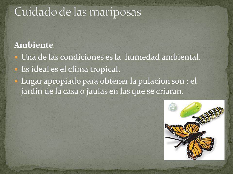 Cuidado de las mariposas