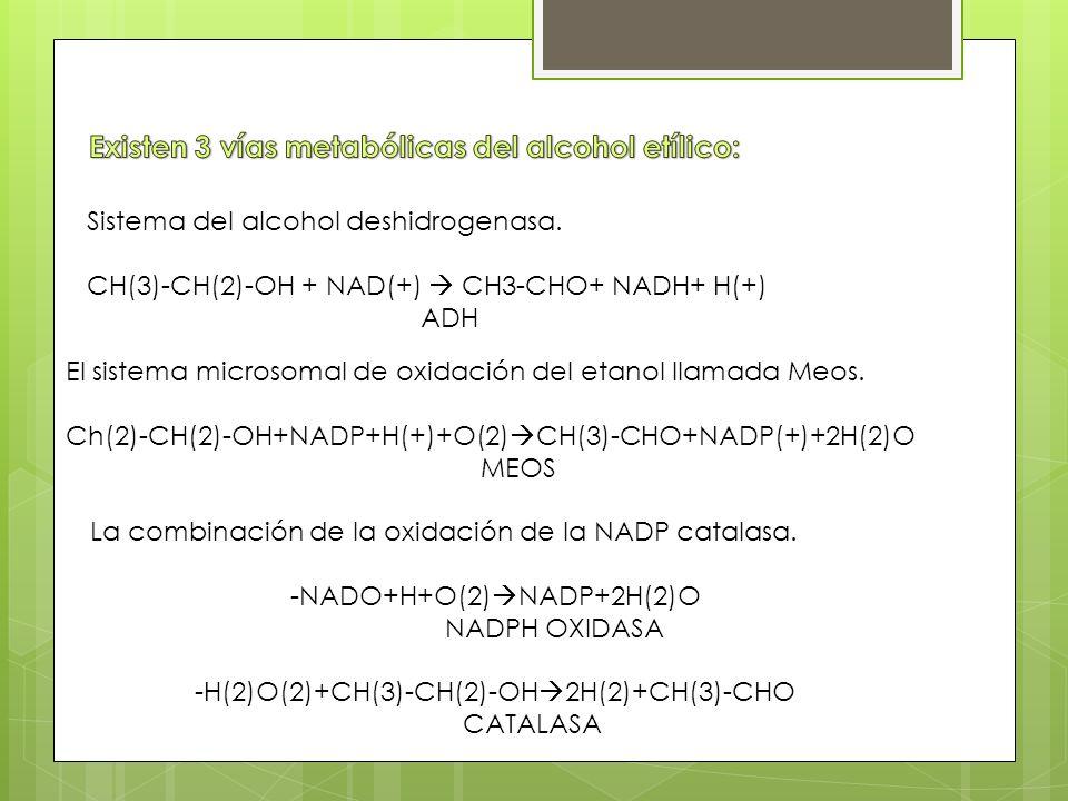 Existen 3 vías metabólicas del alcohol etílico: