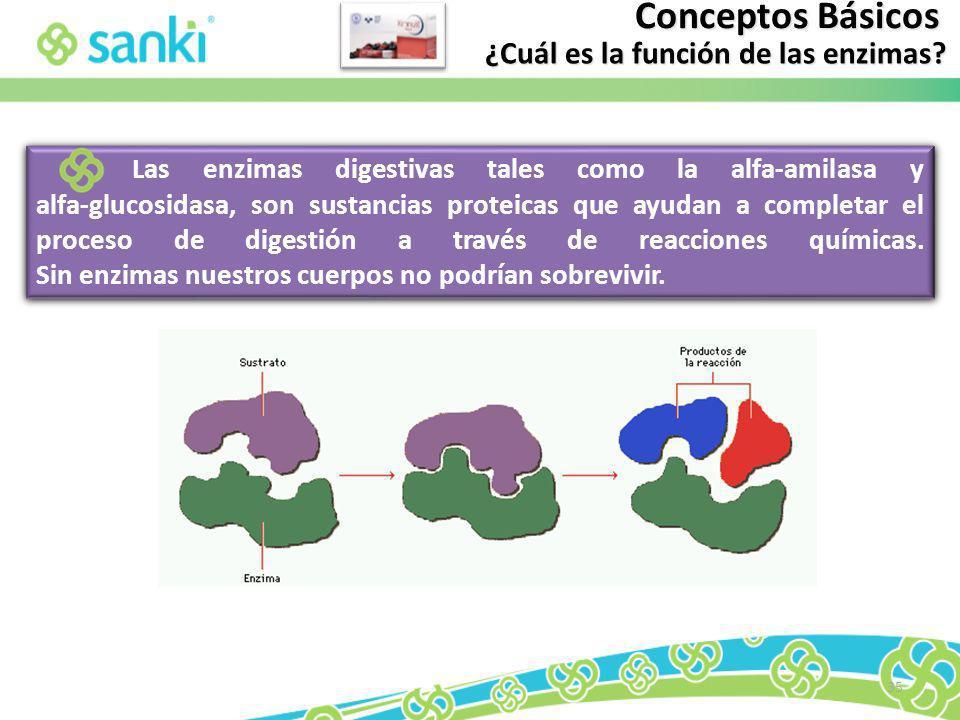 ¿Cuál es la función de las enzimas